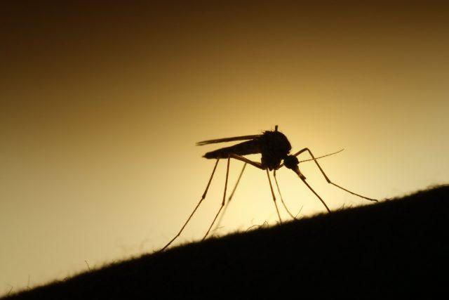 Hacia la erradicación de la malaria en el mundo
