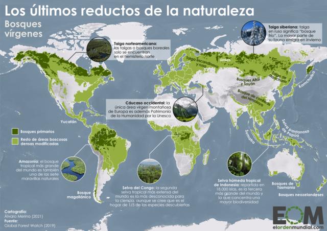 El mapa de los bosques vírgenes del mundo